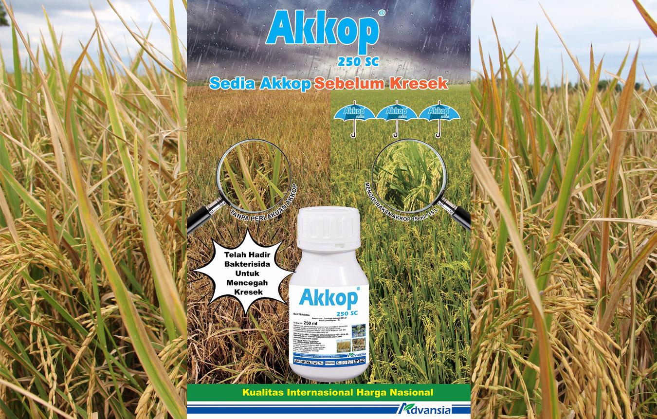 Akkop